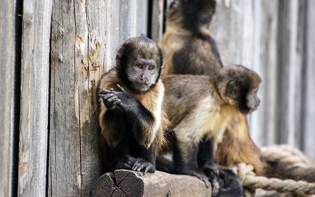 Opice v živalskem vrtu