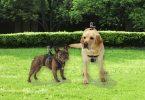 GoFetch - GoPro dodatek za psa